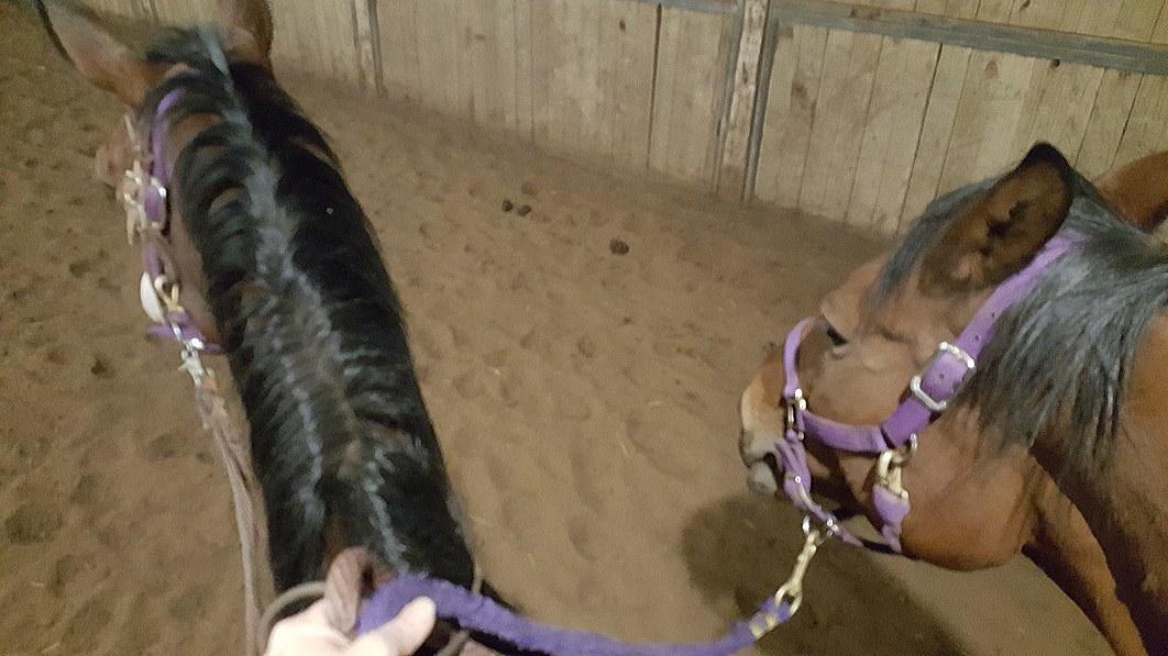 Ponying!